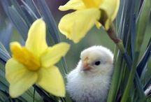 Spring feel