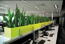 Workstation Planters / Contemporary indoor planters for commercial workspaces.