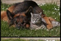 Cats and dogs / Both together
