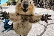 Hello world / funny animals