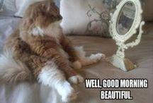 Funny-Pets o.O