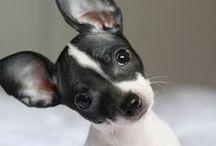 Puppy 'Love'