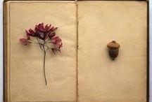 Botanicals / by Diane Knott