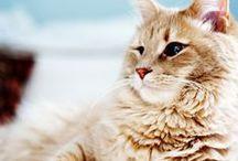 Cat 'Love'