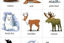 Speech arctic animals