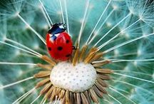 Ladybugs / by Thais Wolf