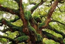 ÁRVORES*TREES