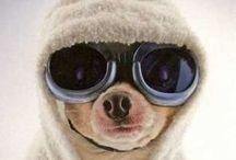 Mascotas lookeadas / Ropa, accesorios, disfraces y todo lo que pueda vestir a tu animaltio