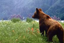 Nature rules / Our furry friends on the mountain