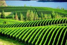 Okanagan Beauty / Scenic landscapes - Wine country - Beautiful hikes in the Okanagan Region