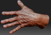 Human Anatomy - Hands