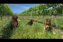 Wineries of McLaren Vale, Willunga & the Fleurieu