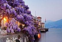 Wisteria / Beautiful shades of purple. / by CeCe Haydock