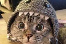 kočky / roztomiloučká