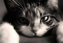Cats! / Cats!