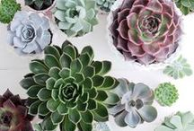 Succulents and cactus / by Thais Wolf