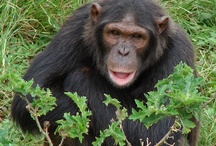 Uganda / http://www.eldertreks.com/tour/ETTD000375 / by ElderTreks