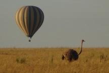 Kenya and Tanzania / by ElderTreks