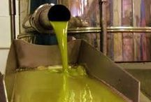 How Olive Oil is produced / Discover the stages of OLIVE OIL ELABORATION, the machinary, the picking and harvesting methods, the different types of #OLIVEOIL, varieties of #olives... and much more!  Our doors are OPEN EVERY DAY OF THE YEAR! www.oleicolasanfrancisco.com www.oleoturismojean.com Olive Oil Tourism - International Department: international@oleoturismojaen.com