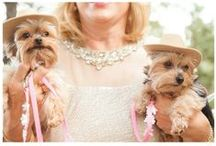VIP's (Very Important Pets) / From ring bearers, to the best man, to special guests of honor, we've seen many pets who have played a special role in the wedding!