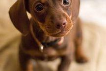 Cute animals / Roztomilá zvířátka  ㋡