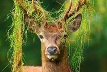 MAGICAL FOREST / Magický les ✴ ✨ ✴