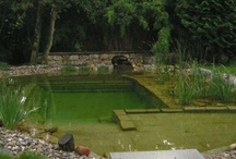 Swimming Ponds / One of the projects planned in the new TV series