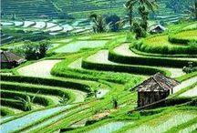 indonesian :: unique