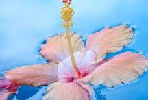 flowers/gyönyörű virágok