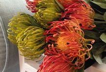 Silk Flowers / This board displays our range of silk flowers.