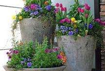 Container Gardening / Ideas and inspiration for gardening in containers