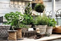 Garden and outdoor spaces