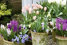 Plants for Spring / A showcase of the best plants to grow for Spring.