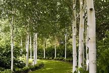 garden: design / by cottonwood