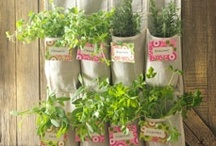 Gardening Ideas / Check out our gorgeous DIY garden inspirations.  / by Coupons.com