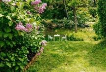 Gardens & Flowers / by Jess Gambacurta