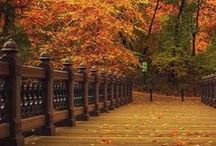 Feeling Fall