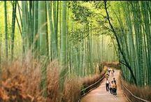 Kyoto - Nov 2013 / by San Smith