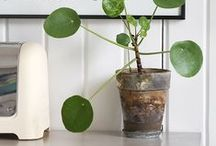 dwelling: house plants / by cottonwood