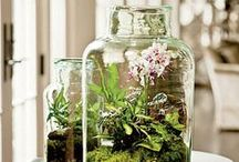 Home: Decor / Decorating items / by Connie Hewitt