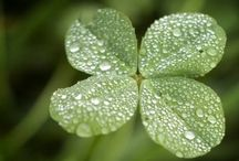 for love of all things Irish/St Patrick's day!