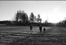 Moosehunt / Älgjakt i Västmanland. Senistive? Warning... pics showing dead moose.