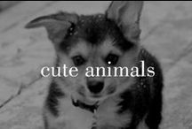 Adorable Animals / Because you can't have enough cuteness on one board.