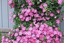 gardenig idea