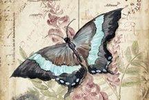 podge butterflies
