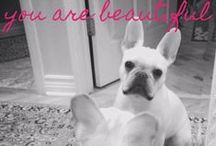 ...Frenchies / My adorable French Bulldog, Brutus, and funny/motivational/inspirational quotes. Just to make you smile!
