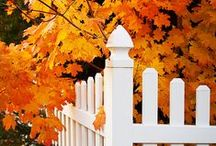 "Welcome ""Fall"" / Loving the change of seasons... / by Diane Gottsman"