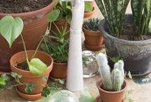 PLANTES . Inspiration, intérieur, végétation