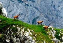Živalski gorski svet