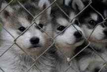 cute animals / Cute animals !